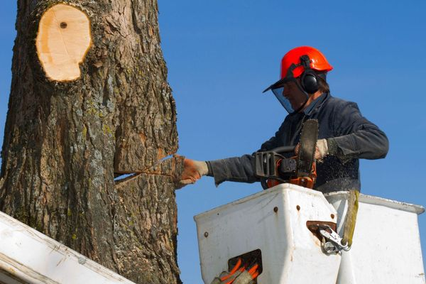 plano-tree-service-and-removal